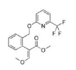 東南亞啶氧菌酯Picoxystrobin