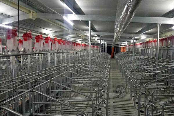 你知道自动化养猪设备有哪些优势吗?