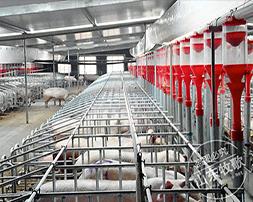 自動化養豬設備飼喂系統原理