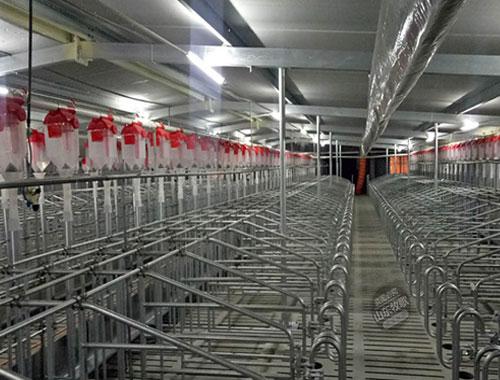 自动化养猪设备猪场疫情过后该做些什么?