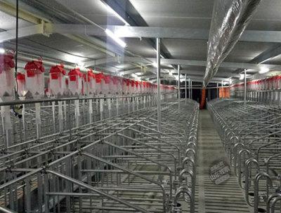 自動化養豬料線