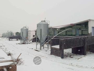 湖北自動化養豬設備