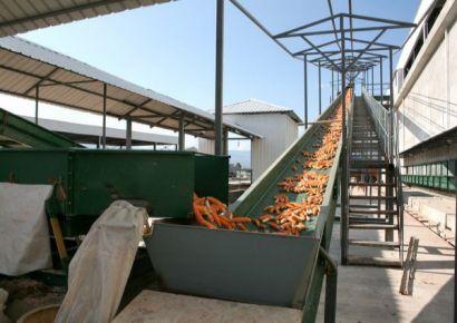 玉米穗分揀