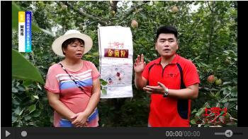 成年版快猫金菌粒在山西酥梨上使用效果报道