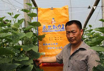 黄 瓜--新乡长垣县赊家舍西村黄瓜种植基地
