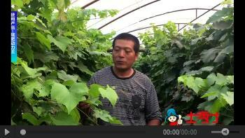 成年版快猫菌肥在黑龙江地区效果使用报道