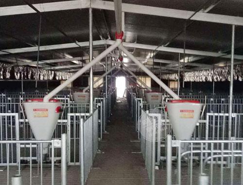 配备自动化养猪设备需要考虑什么?