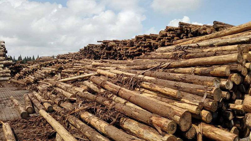 木材加工質量提升