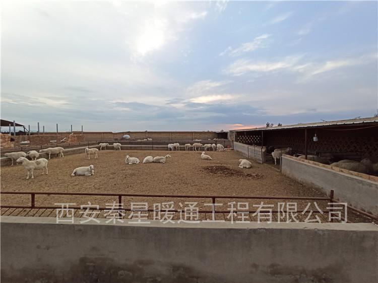 陜西靖邊羊舍冬季采暖安裝畜牧業電采暖