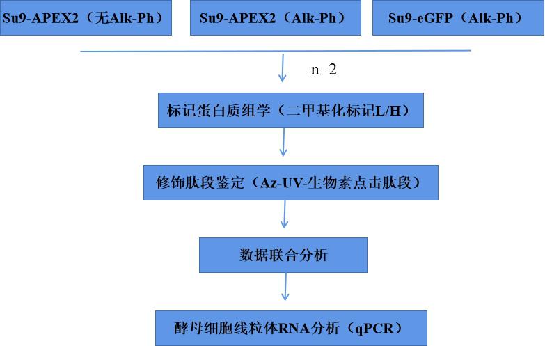 蛋白質組學