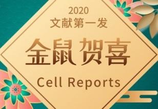 Cell Reports|TRIM32/USP11調控ARID1A穩定性以及調控鱗狀細胞癌發生發展