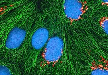 微管精-確切割