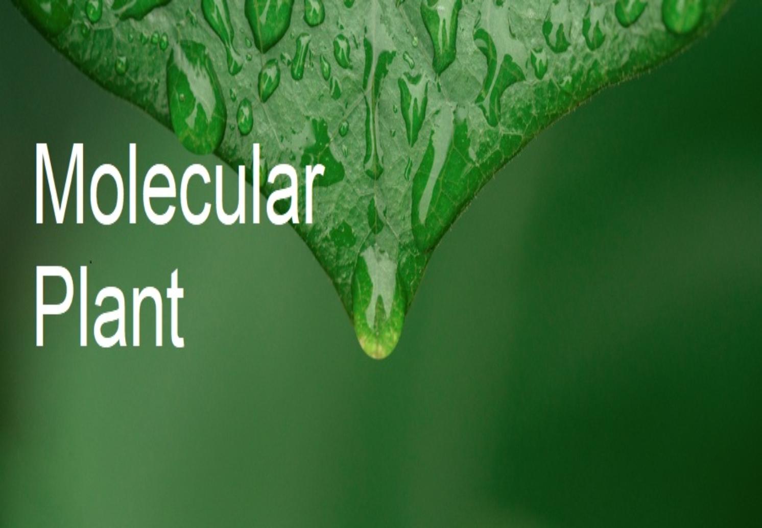 「青蓮客戶文章」磷酸化檢測揭示植物免疫新機制