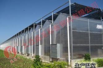 FRP透明瓦 生產