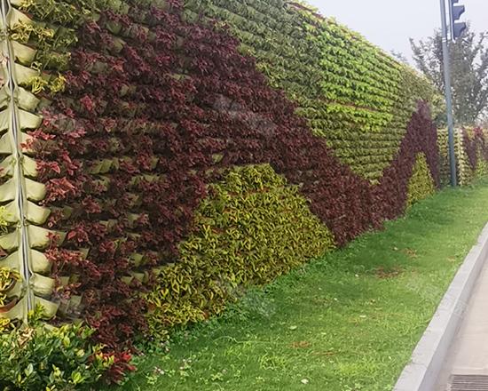 鹽城南洋機場快速路綠化工程