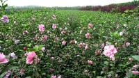 新入手的花卉养护方案