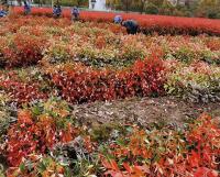 苗木需求呈规模化转变的原因