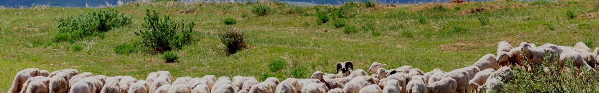 青海飼料,牛羊飼料
