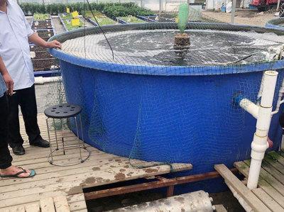 魚菜共生系統紫外線消毒殺菌