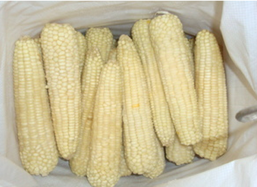 上海速凍玉米棒