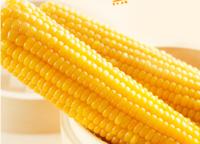 上海甜玉米棒