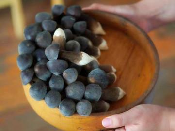 黑皮雞樅菌銷售