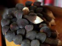 黑皮雞樅菌供應