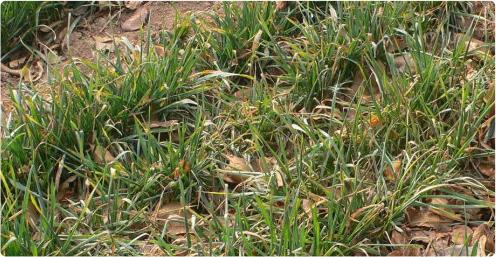 普通-微生物菌肥